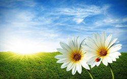 fiori_primavera_1280x800